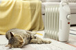 Cute tabby cat near electric heater at home