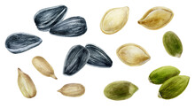 Sunflower Seeds And Pumpkin Seeds Set Watercolor Illustration Isolated On White Background