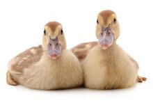 Two Yellow Ducks.