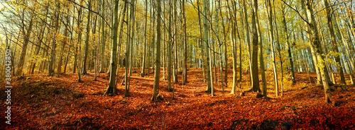Carta da parati Beautiful forest scenic panorama.