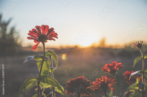 Foto Red flowers in autumn sunset