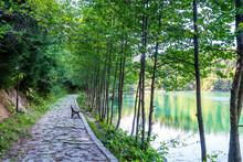 A Beautiful Promenade With Cco...