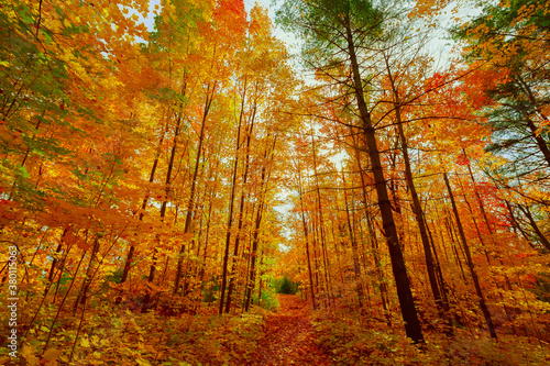 Nice beautiful, inviting natural colorful autumn season forest in the morning, landscape background