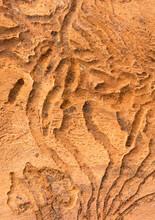 Beetle Larvae Tracks, Closeup