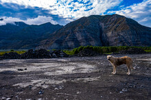 View Of Standing Anatolian Shepherd With The Background Of A Rocky Mountain