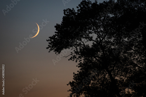 moonlight Fotobehang