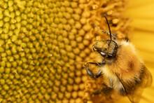 Overhead Close Up Macro Of Bee...