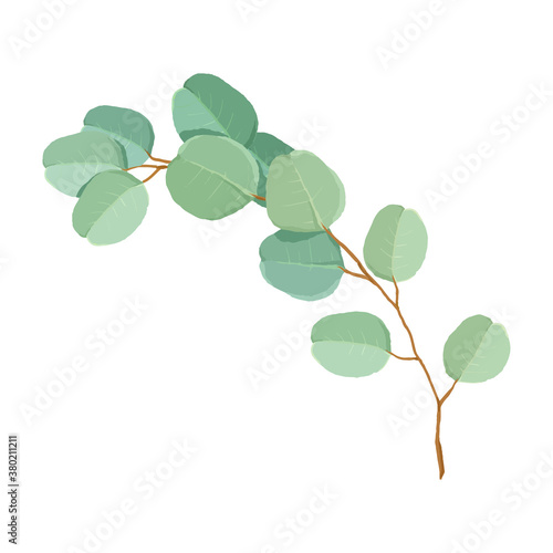 Slika na platnu Hand painted Style green silver dollar eucalyptus leaves and branches Vector Illustration