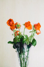 Faded Roses In Closeup