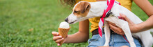 Cropped View Of Young Woman Feeding Jack Russell Terrier Dog Ice Cream