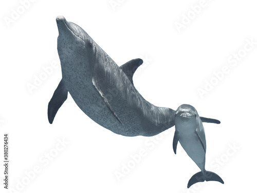 Fotografie, Tablou Bottlenose dolphins family (parent and  baby) isolated on white background