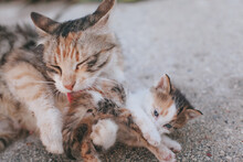 Stray Cat Cleaning Her Baby