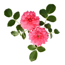 Rose Flowers And Leaves In A F...