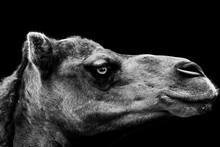 Grayscale Shot Of A Portrait O...