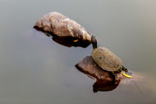 A Turtle With A Beautiful Mult...