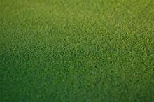 Putting Green Grass