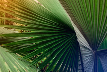 Tropical Palm Leaf And Shadow,...