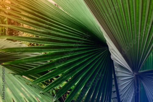 tropical palm leaf and shadow, abstract natural green background, dark blue tone #380345630
