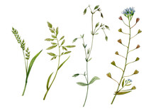 Watercolor Hand Drawn Herbage....