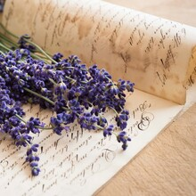 Studio Shot Of Lavender On Antique Handwriting