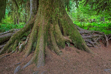 Close-up Of Tree Trunk And Roots