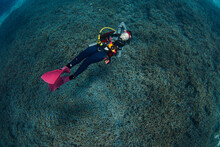Scuba Diver Diving On Tropical Reef With Staghorn Coral Background .