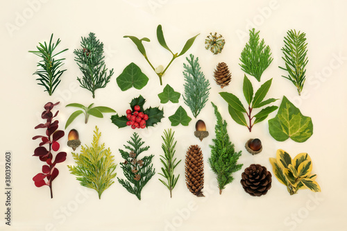 Traditional winter flora & fauna with holly & large greenery collection Fototapete