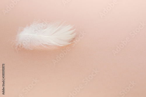 Delicate fluffy bird feather on a velvet background Canvas Print