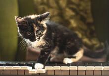 Kitten On A Piano.