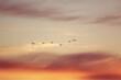 birds flying in the sunset sky