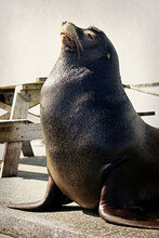 Sea Lion Putting On A Show For...