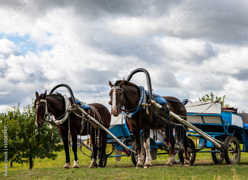 Photo brown horse harnessed with a vintage carriage against the backdrop of a stormy s