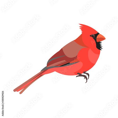 Photo American cardinal bird