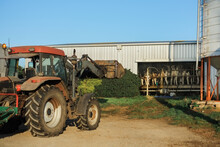 Tractor On Farm With Dairy Herd Being Milked In Background