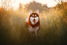 Portrait Of Young Alaskan Mala...