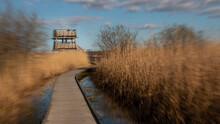 Bird Watching Tower In Wetland