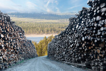 Heaps Of Timber In Sunny Forest Landscape