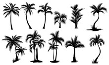 Set Palm Trees Collection Silhouette Palm Tree Contours Tropical Plants.