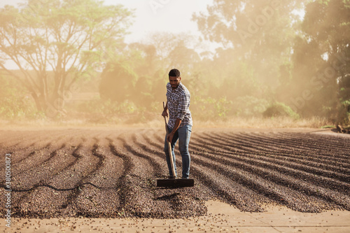 Fototapeta Man with squeegee working on drying coffee bean obraz