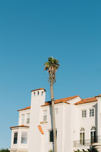 Palm Tree In Front Of Mission Style Mansion In San Francisco