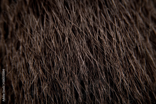 Fototapeta Close up of the brown cat's fur is arranged vertically