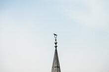Minaret Bird