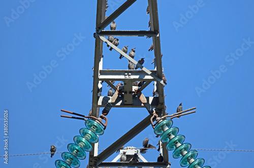 Fototapeta Energetic pylon with a lot of starlings
