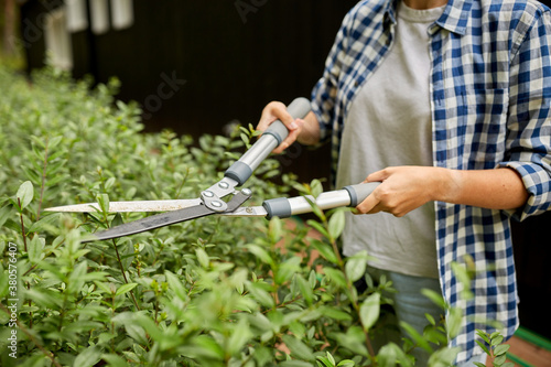 Obraz na plátně gardening and people concept - woman with pruner or pruning shears cutting branc