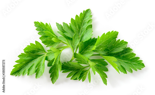 Obraz Parsley isolated. Parsley leaf on white. Parsley leaves top view. Full depth of field. - fototapety do salonu