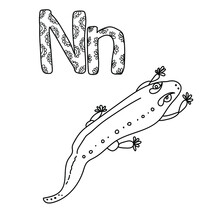 Coloring Page For Study Letter N, Outline Illustration  Of Newt And Volumetric Letters With Patterns, Vector Outline Illustration