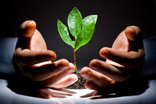 Hands Holding A Green Plant