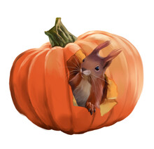Funny Squirrel And Pumpkin Halloween. Watercolor Drawing