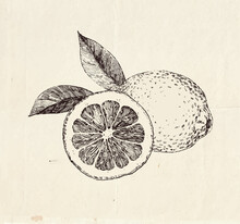 Hand Drawn Lemons, Sliced With...