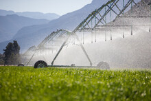 Close Up Image Of A Center Pivot On A Green Field Of Wheat, Providing Irrigation To The Crops